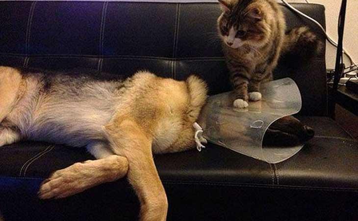 Mačka i pas kod veterinara