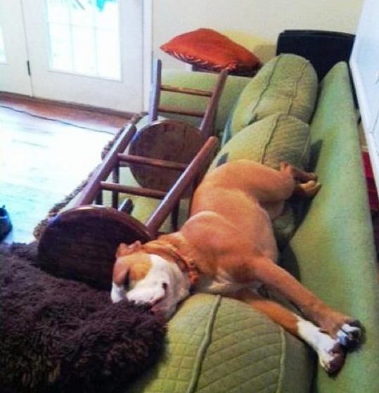 Pas na kauču