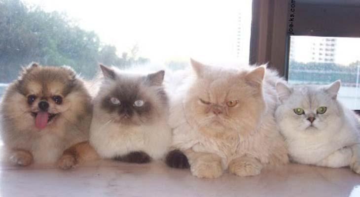 Pas špijun među mačkama