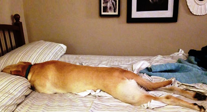 Pas u mom krevetu