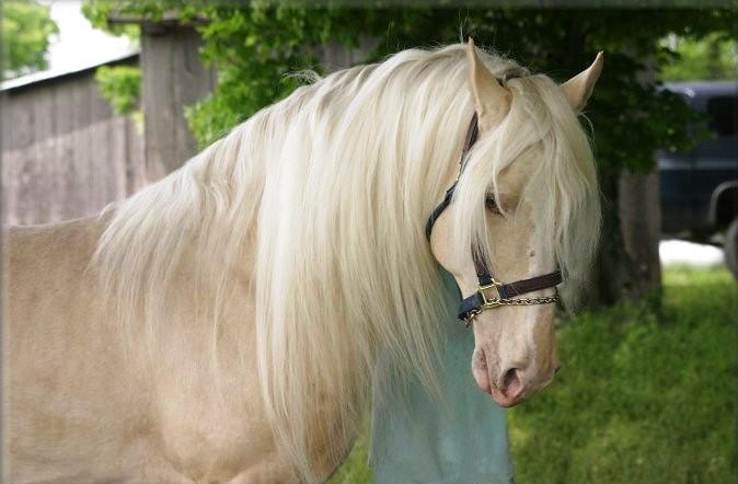 Predivni beli konj